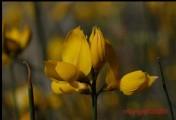 http://mlangerphotography.com.br/wp-content/uploads/2014/10/136.jpg