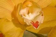 http://mlangerphotography.com.br/wp-content/uploads/2014/10/186-e1413901376543.jpg