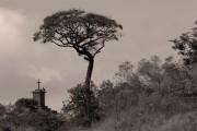 http://mlangerphotography.com.br/wp-content/uploads/2014/10/TreeUrubú-sépia.jpg